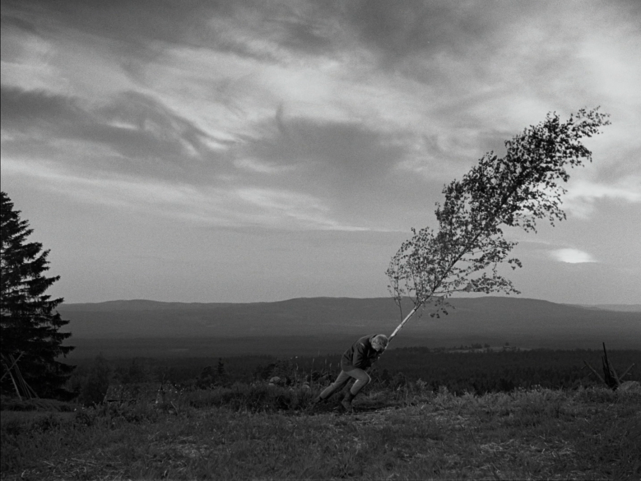Max Von Sydow pulling down a birch tree in The Virgin Spring